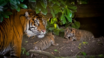 Stelios Foundation Embraced Tiger Mission