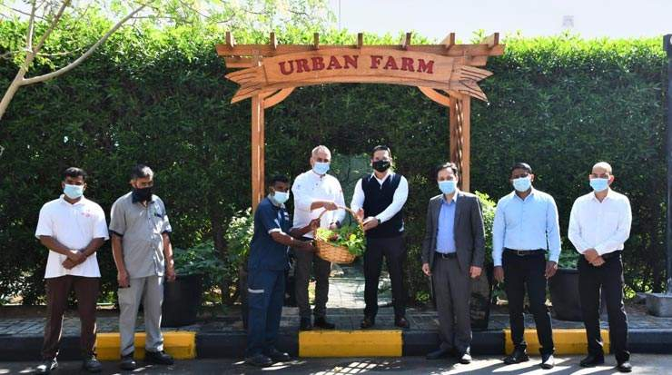 Ramada Hotel & Suites by Wyndham Ajman team harvested organic crops from its urban farm