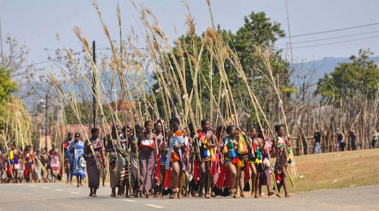 Tens of thousands of maidens, led by Swazi princesses, provide a sea of colour as they dance and sing, proudly carrying their cut reeds