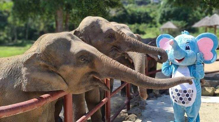 Meliá Koh Samui comes to the rescue to feed elephants