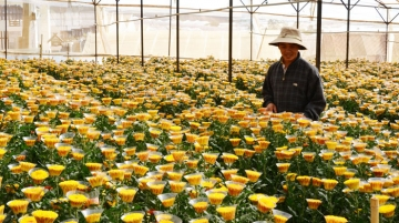 International Flower Festival of Dalat