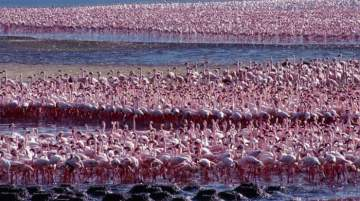 Lake Bogoria National Reserve encourages tourists to visit and experience it for themselves